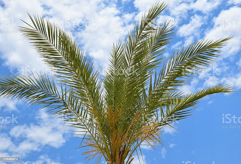 palm and sky stock photo