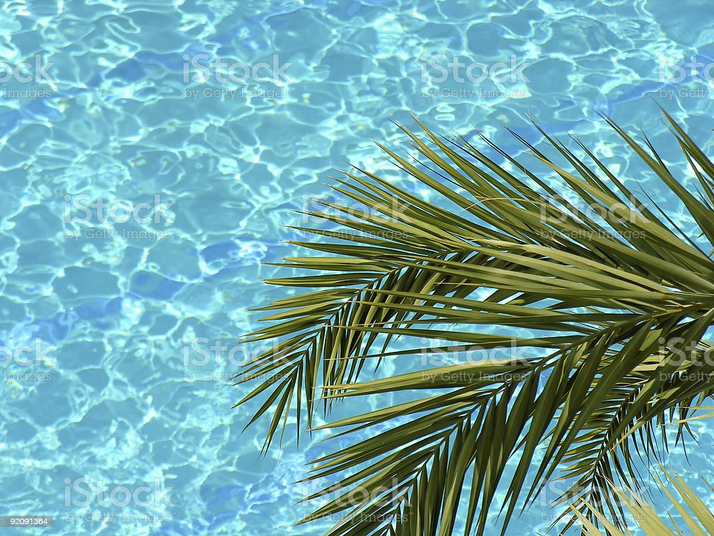 palm and water pool stock photo