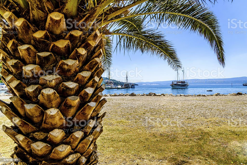Palm at seaside with visible ship and harbour. stock photo