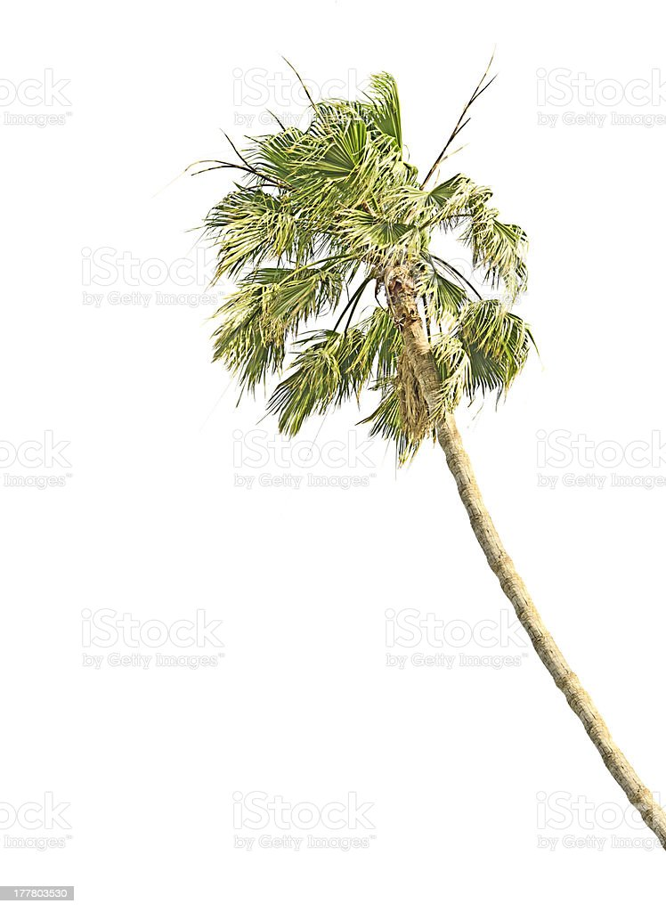Palm at storm stock photo