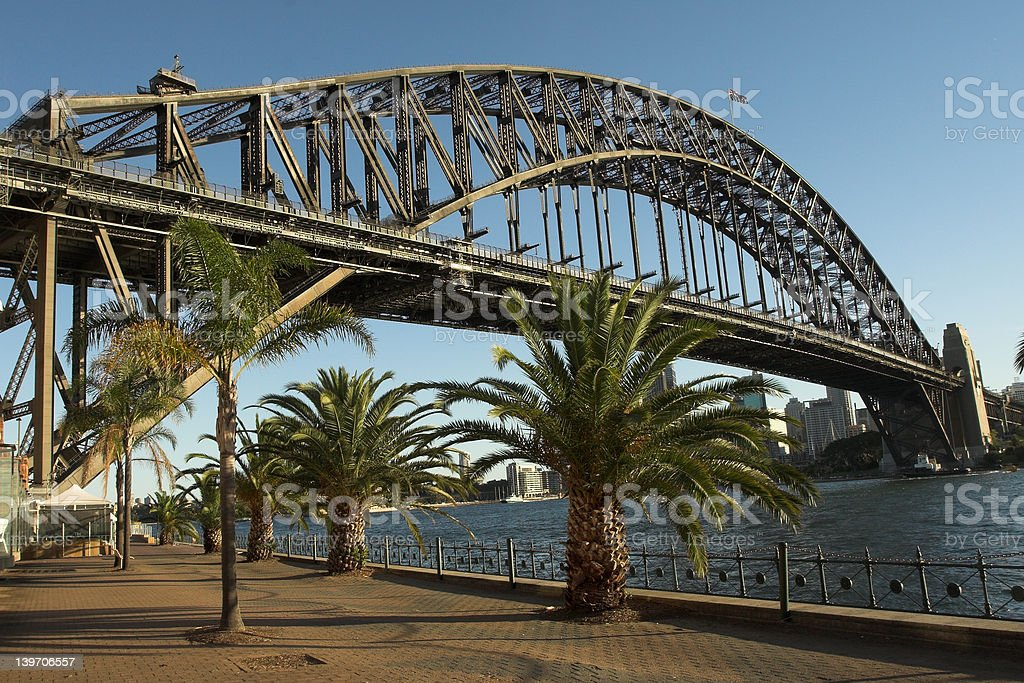 Palm at Sydney Harbour Bridge royalty-free stock photo