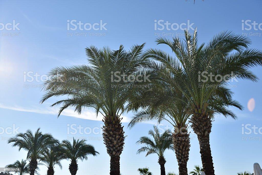 Palmen Hintergrund gegen einen blauen Himmel stock photo