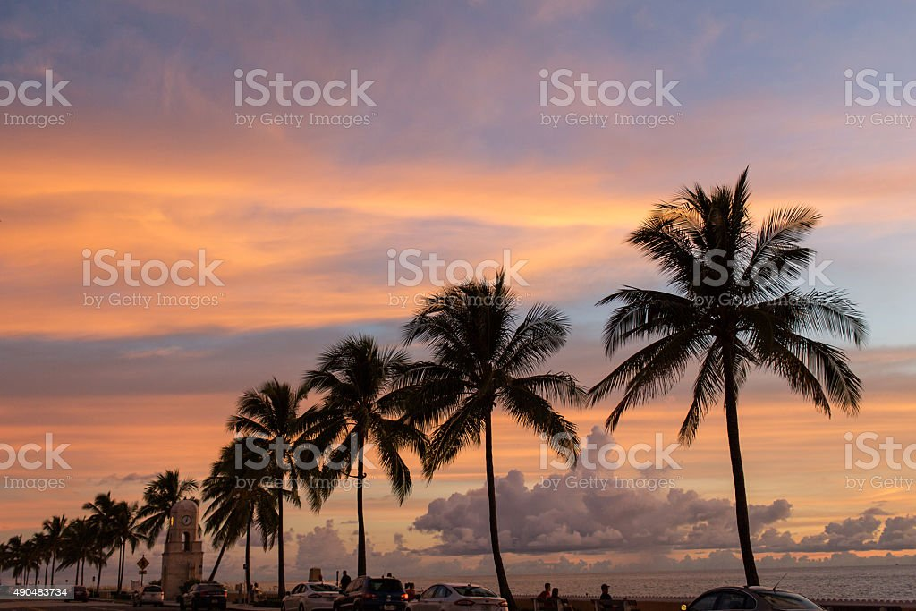 Palm Beach Palm Trees stock photo