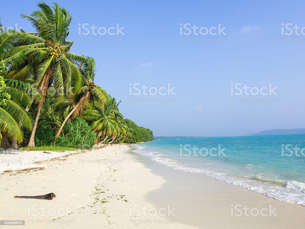 Palm beach stock photo
