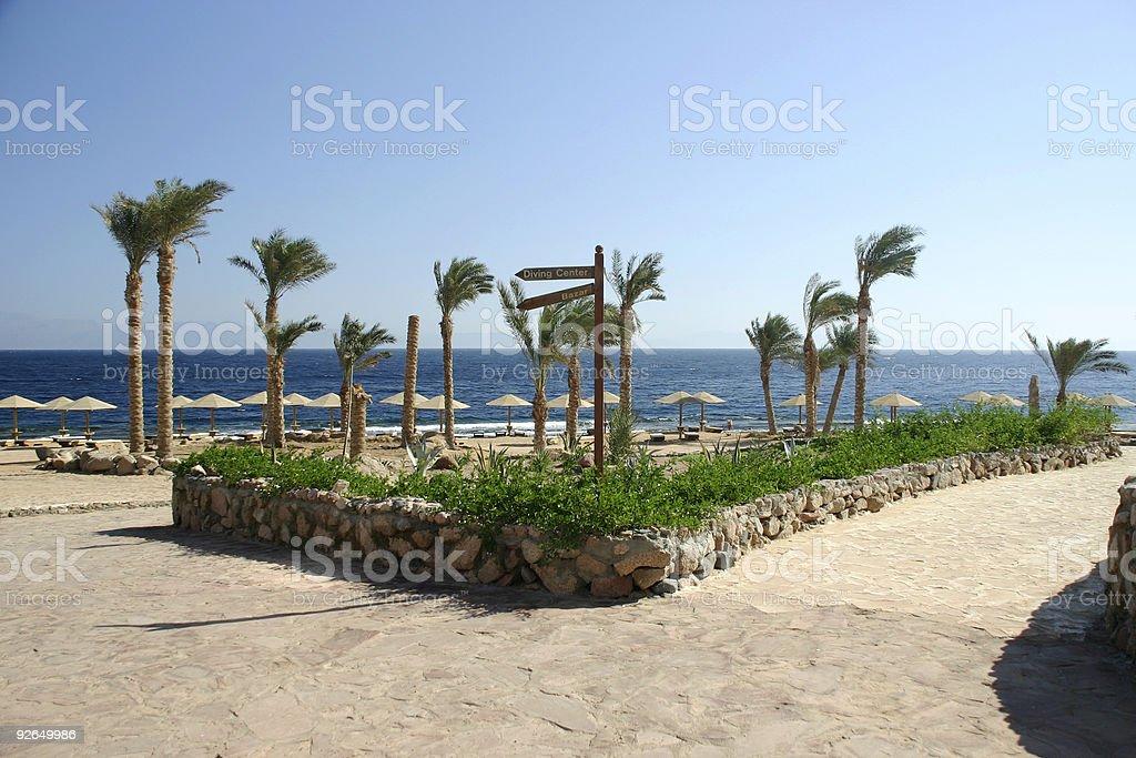Palm beach royalty-free stock photo