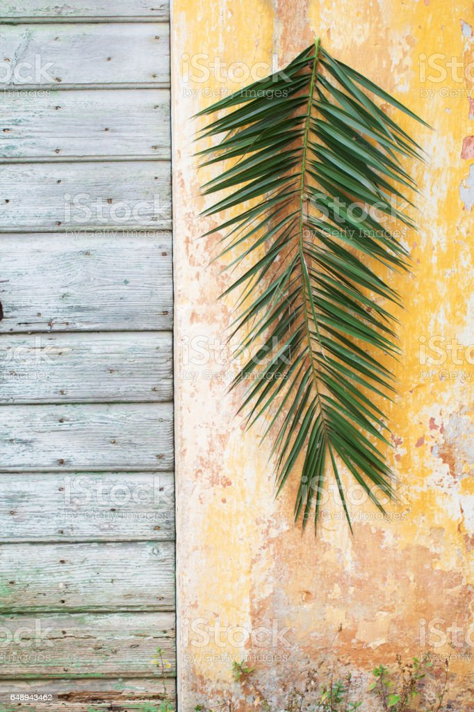 Palm branch hanging on a old orange vintage wall and wooden door as a Palm sunday and antique Jerusalem background stock photo