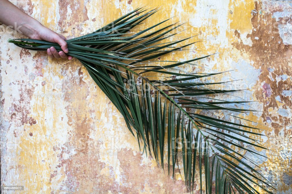 Palm branch in woman hand and beautiful old vintage cracked orange paint wall stock photo