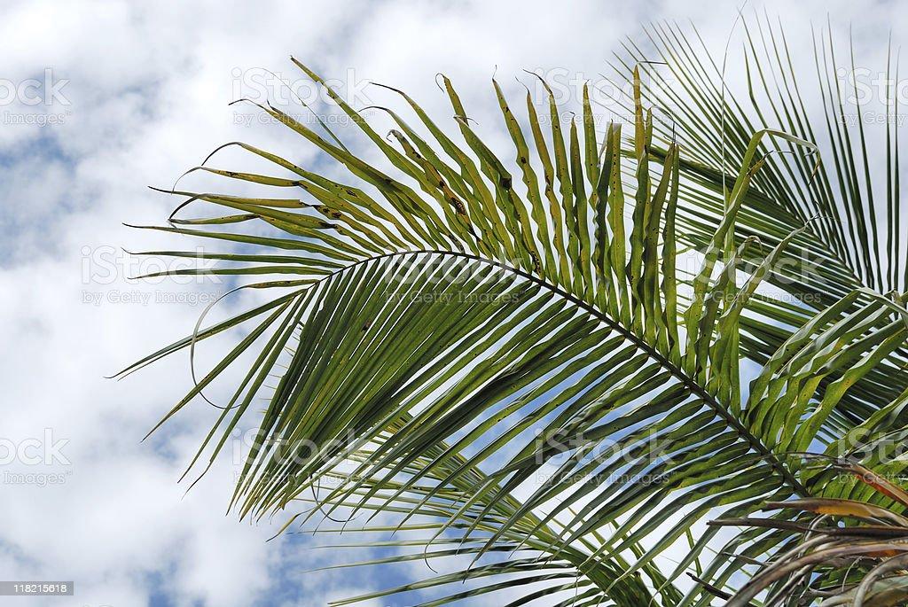 Palm branch royalty-free stock photo