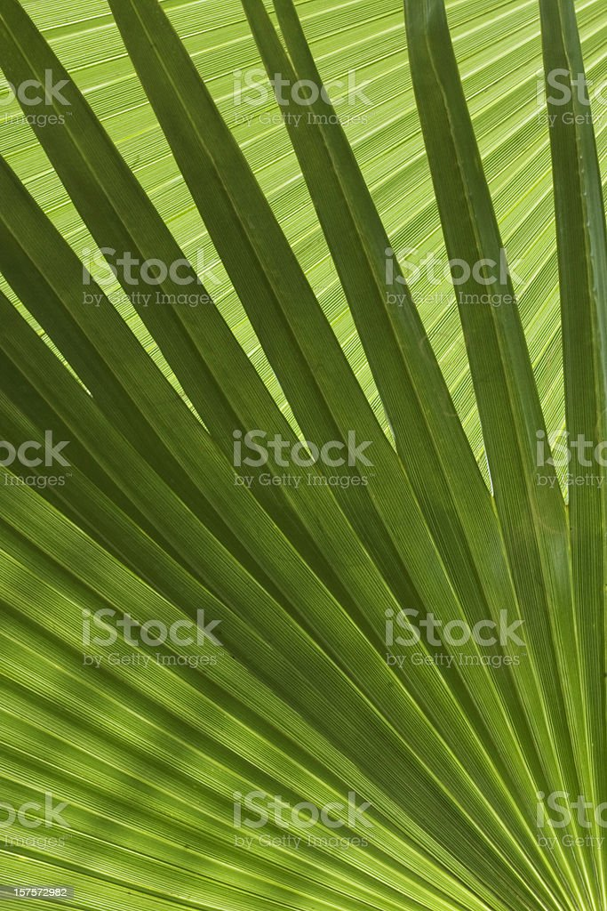Palm Branches stock photo