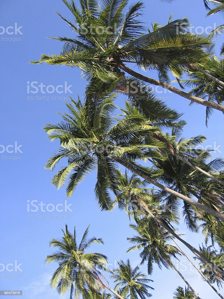 palm canopy philippines tropical beach royalty-free stock photo