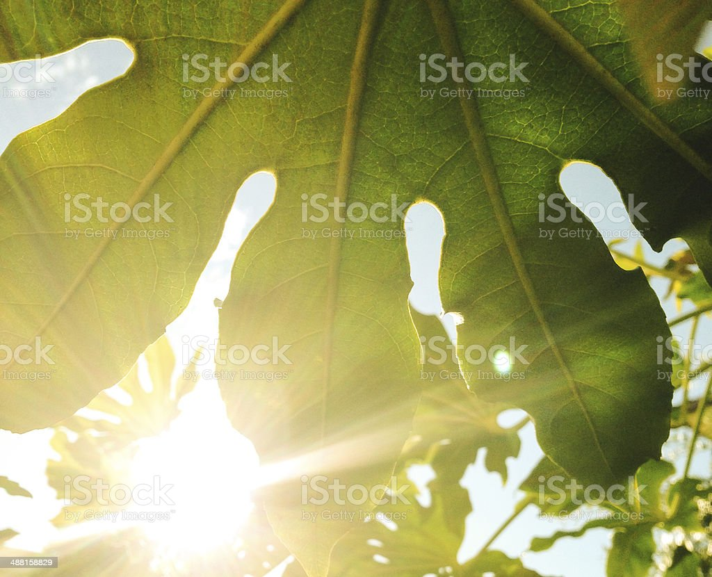palm close up royalty-free stock photo
