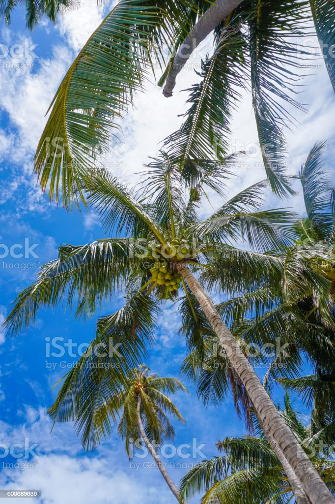 Palm crown upside view stock photo