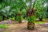 Palm Farm