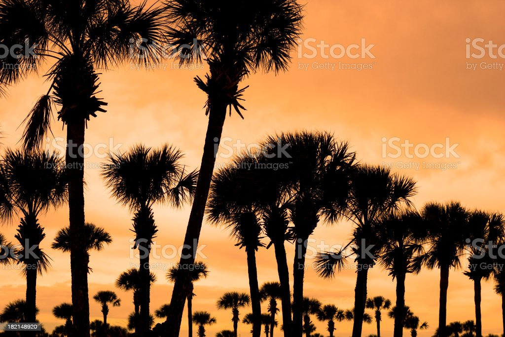 Palm Fever royalty-free stock photo