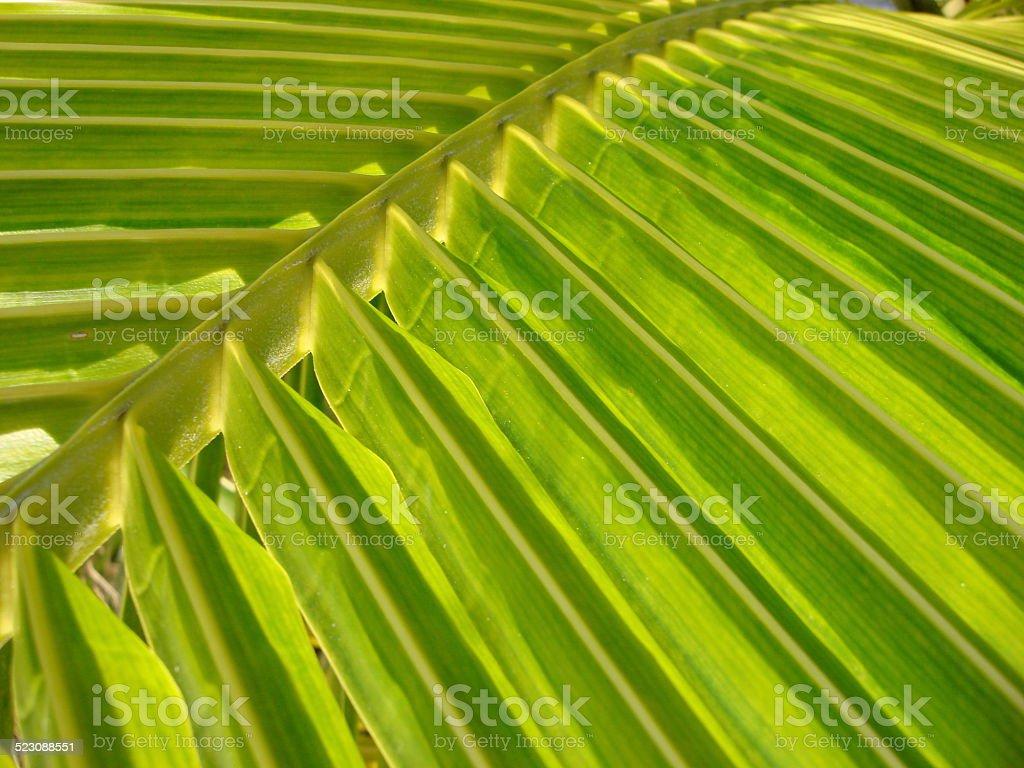Palm Folds stock photo