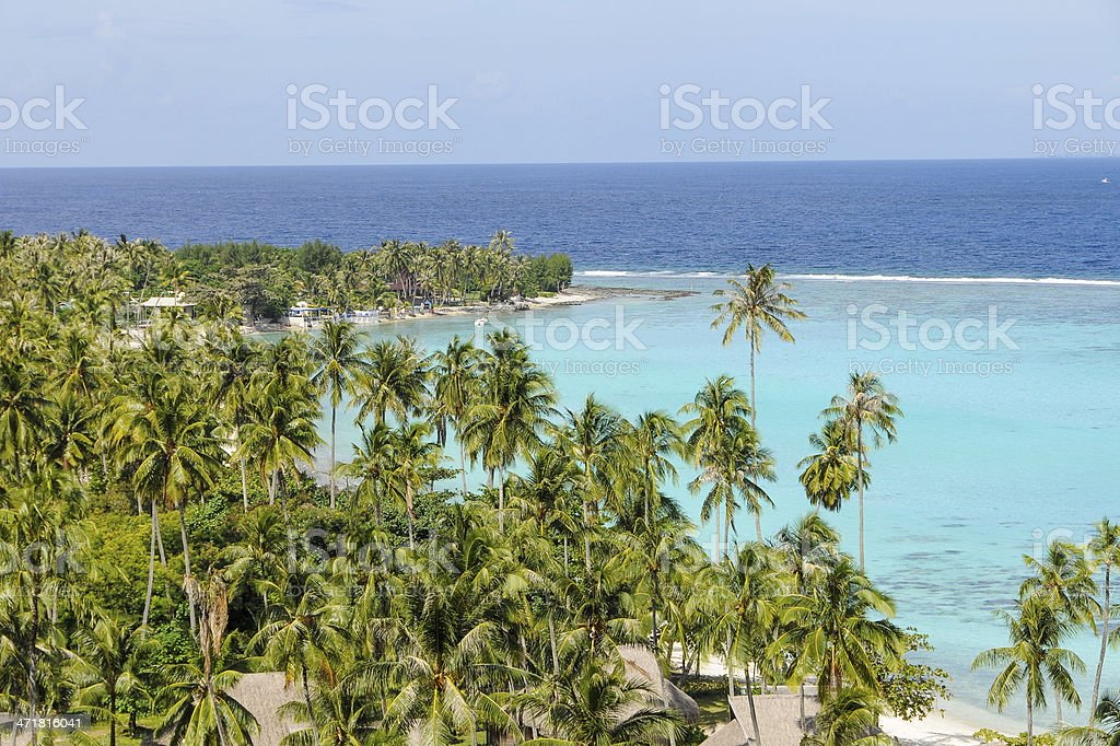 Palm forest in Moorea royalty-free stock photo