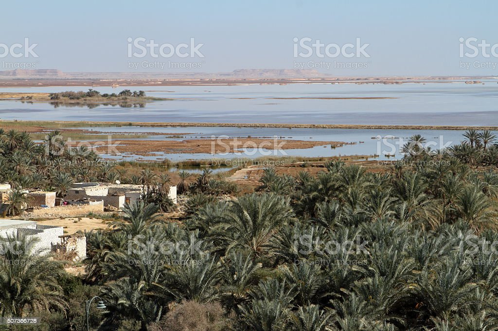 Palm forest in the Siwa Oasis in Egypt stock photo