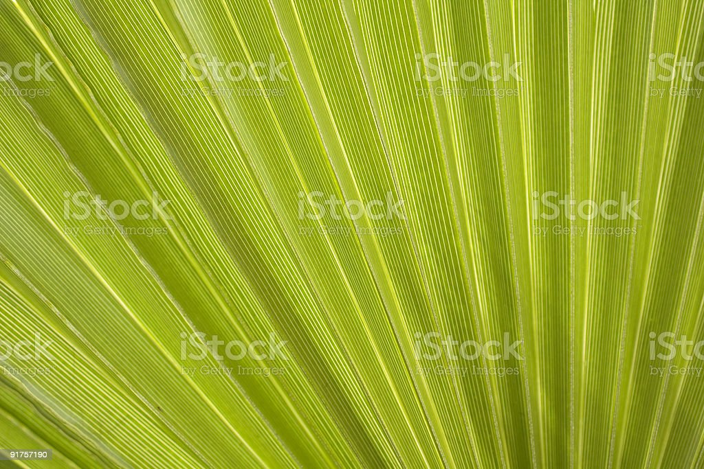 Palm Frond Background stock photo