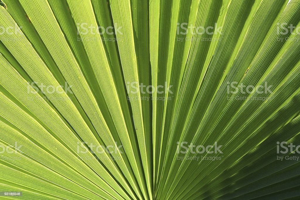 Palm frond in the sunshine royalty-free stock photo