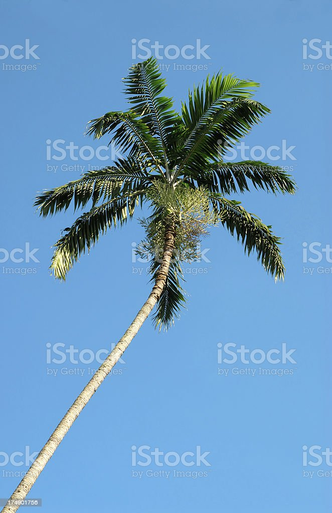 palm frond stock photo