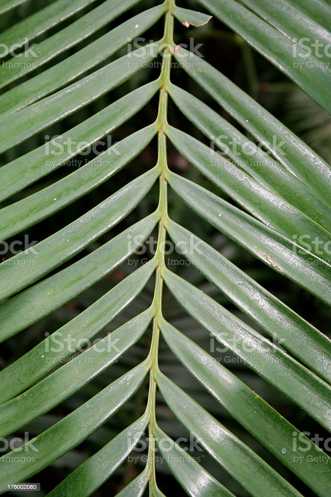 palm frond plant royalty-free stock photo