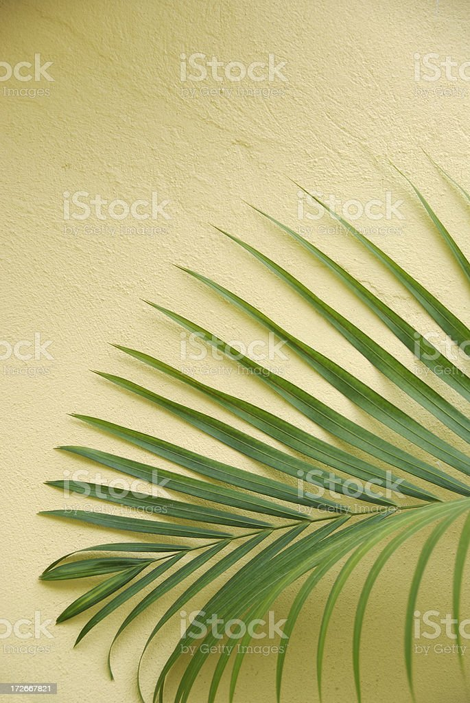 Palm Frond Yellow Wall Copy Space stock photo
