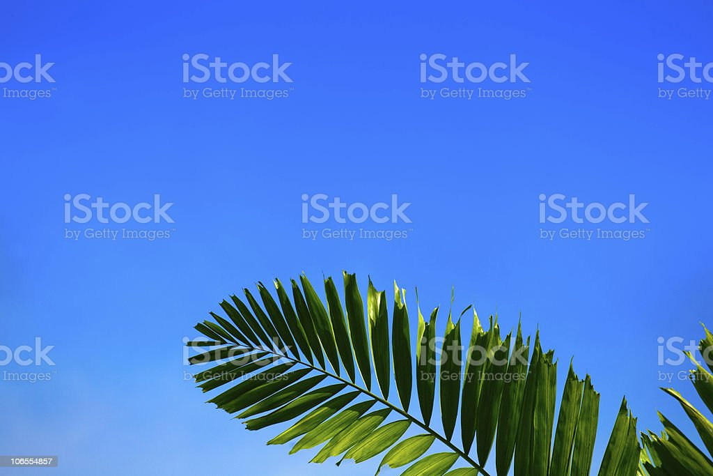 Palm fronds and sky royalty-free stock photo