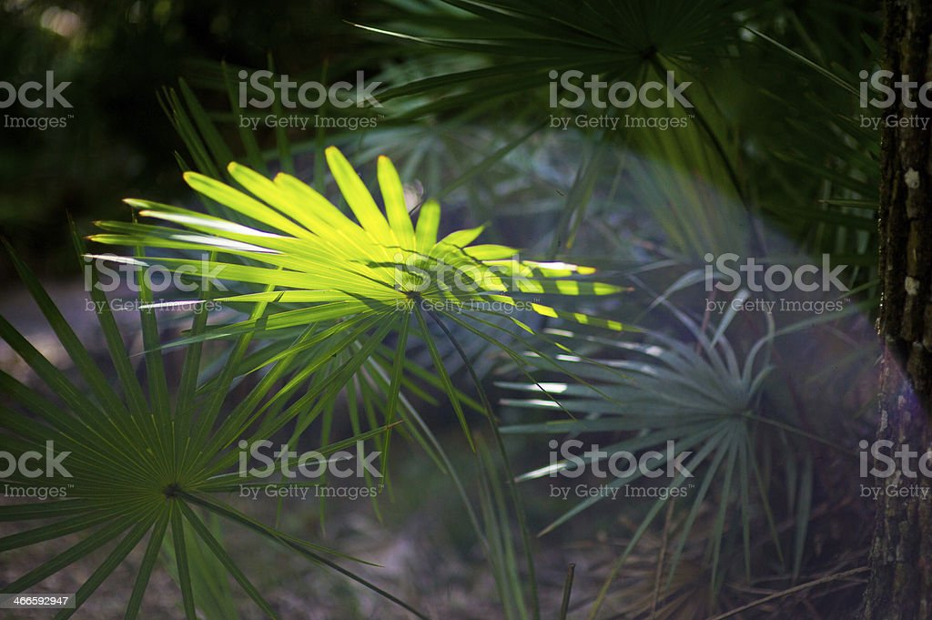 Palm Fronds and Sunbeam royalty-free stock photo