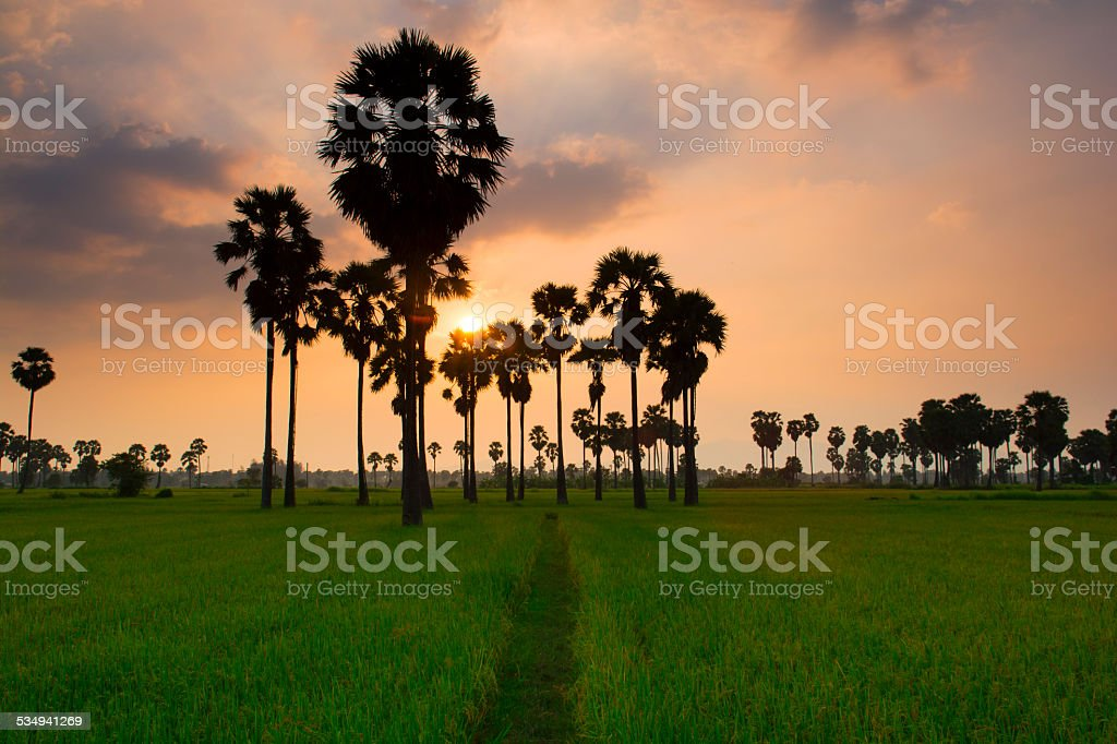 Palm grove and The Sun royalty-free stock photo