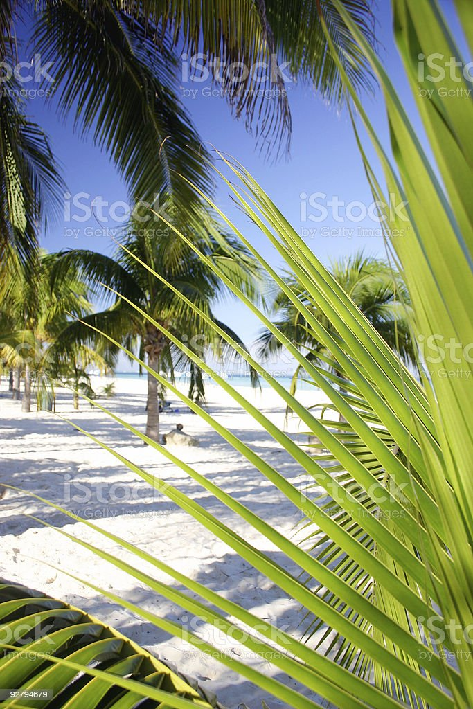 Palm Grove Foliage royalty-free stock photo