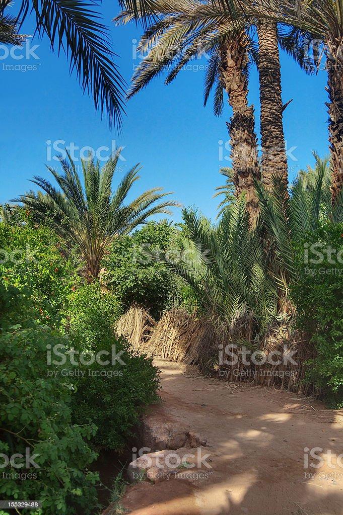 palm grove in Morocco stock photo