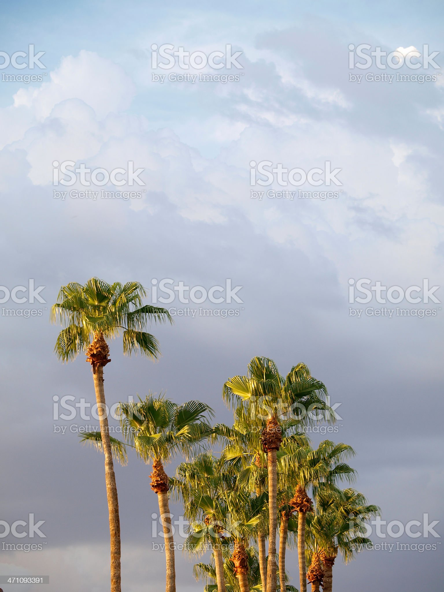 Palm Grove in warm light royalty-free stock photo