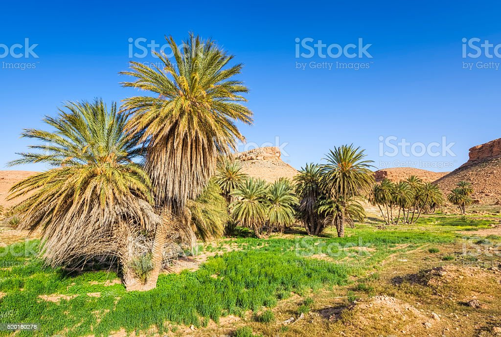 Palm grove oasis in desert of Tunisia / Africa stock photo