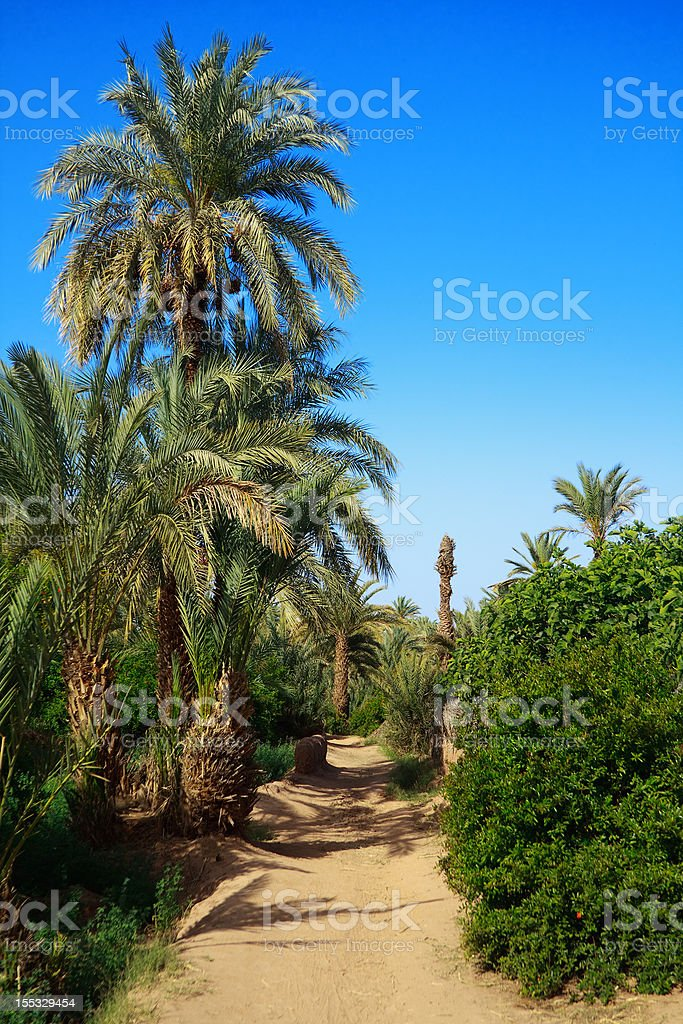 palm grove stock photo