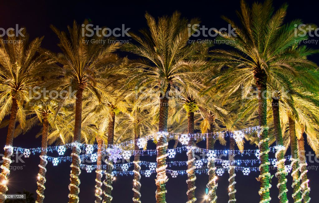 Palm Holiday Lights stock photo