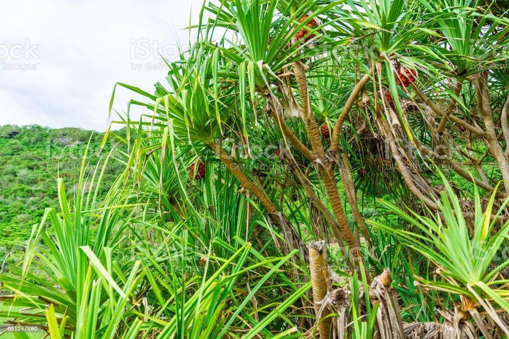 Palm in Bali stock photo