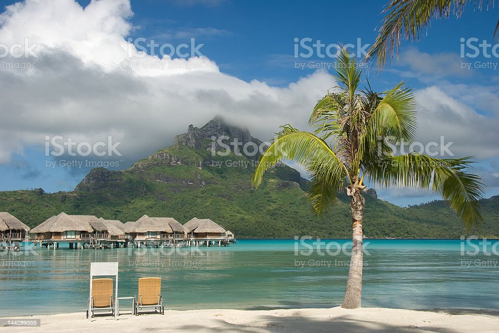 Palm in Paradise royalty-free stock photo
