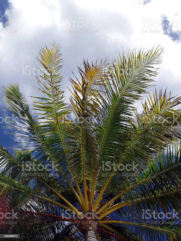 Palm in the Clouds royalty-free stock photo