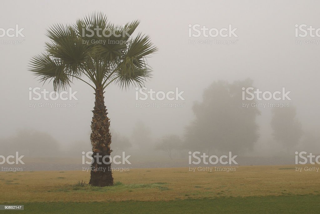 Palm in the Fog royalty-free stock photo