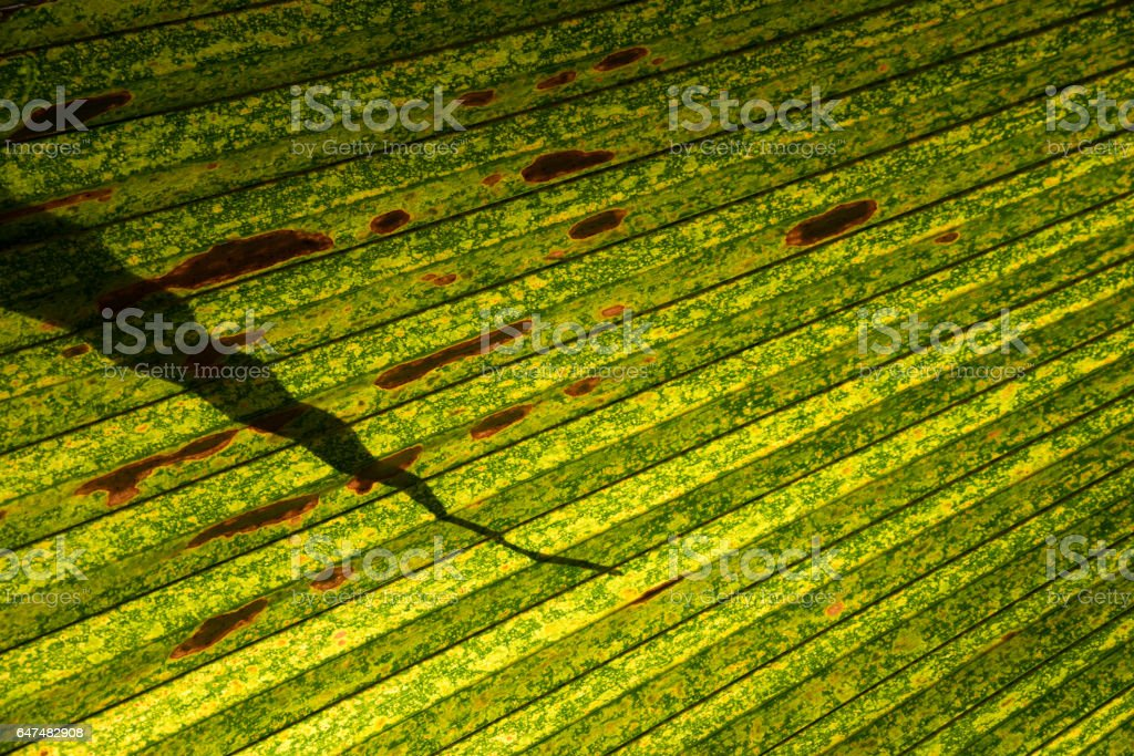Palm Leaf Abstract stock photo