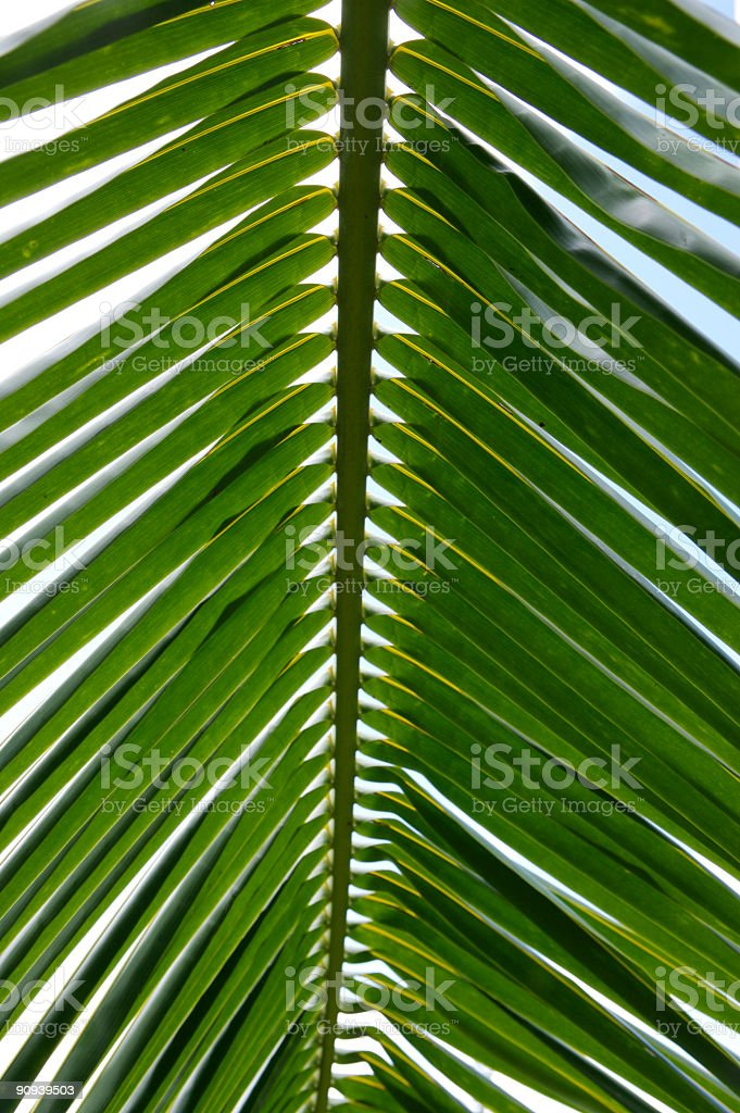 Palm leaf abstract. royalty-free stock photo