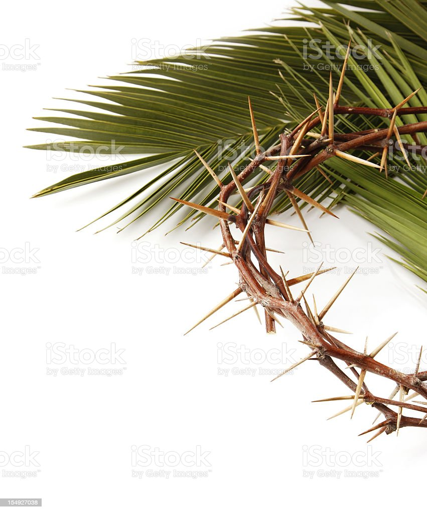 Palm Leaf and Crown of Thorns on White stock photo