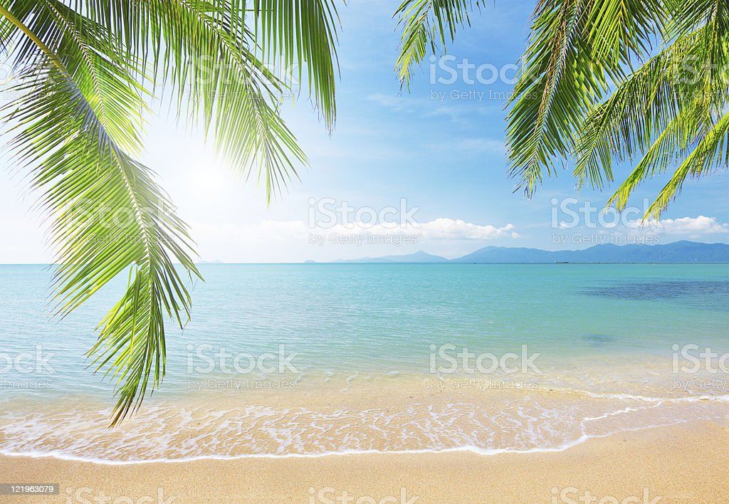 Palm leaf and tropical beach stock photo