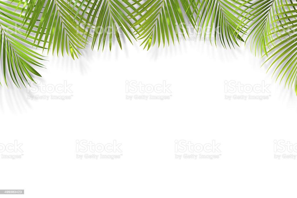 Palm leaf background isolated on white stock photo