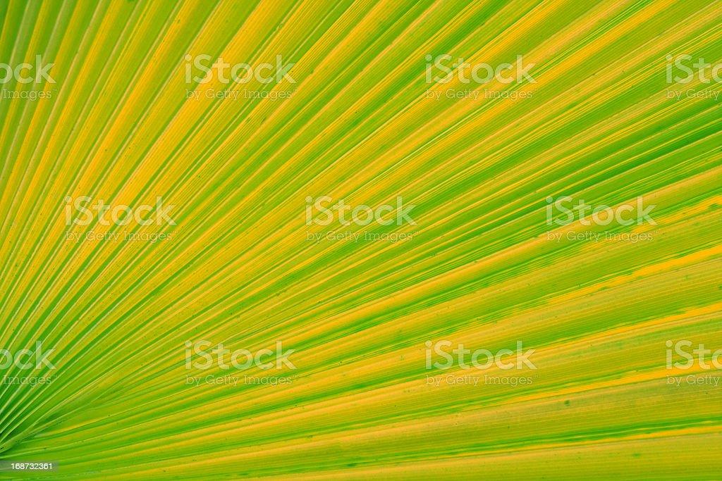 Palm Leaf Background royalty-free stock photo