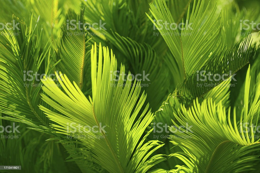 Palm leaf background stock photo