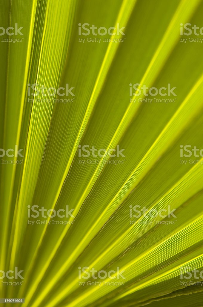 Palm Leaf background royalty-free stock photo