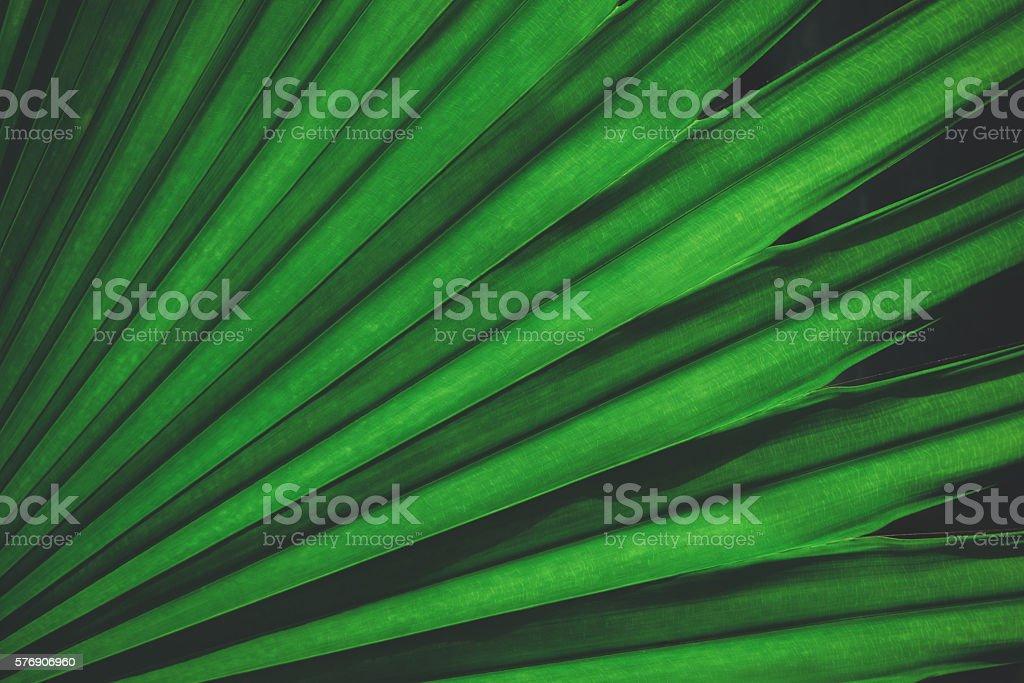 Palm leaf background vintage color stock photo