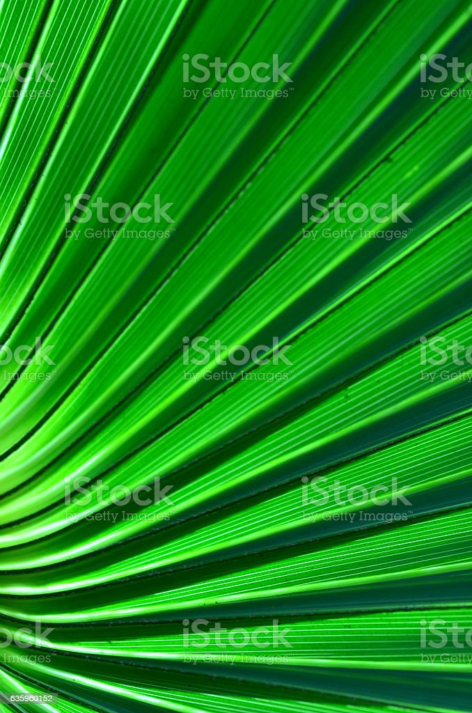 Palm leaf base with curves converging stock photo