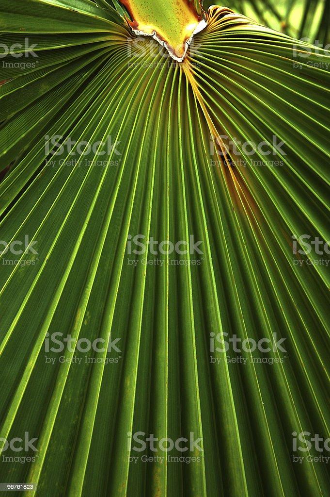 Palm Leaf Design stock photo